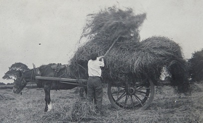 Photograph of Haymaking, 1916.