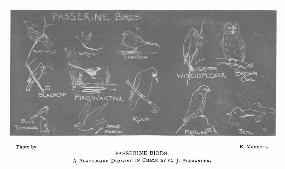 Photograph of blackboard with C J Alexander's drawings of birds